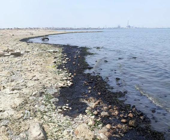 بالصور..إجراءات عاجلة لتلافي تلوث بقعة الزيت على خليج السويس