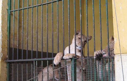 حديقة الحيوان بالاسكندرية تستقبل 4 آلاف زائر أول أيام عيد الأضحي
