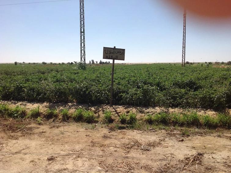 استرداد 87 فداناً من أراضي أملاك الدولة بيوسف الصديق
