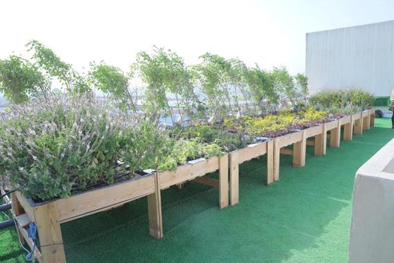 وزيرة البيئة تطلق مشروع زراعة الأسطح