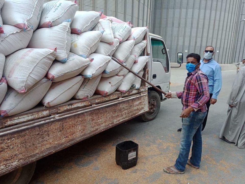 افتتاح موسم توريد القمح من المزارعين بصومعة في الفيوم